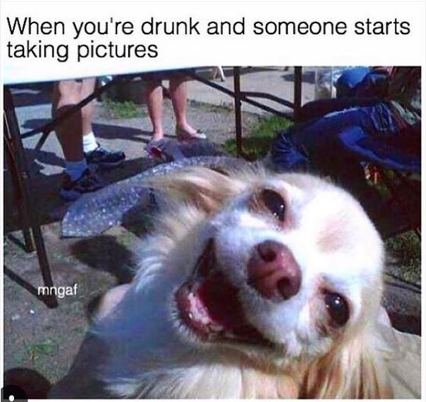2887a1cd44d3c823d0cc5b403a78c978 drunk memes funny dog memes 11 memes to send to your friend that always drunk the hot feed