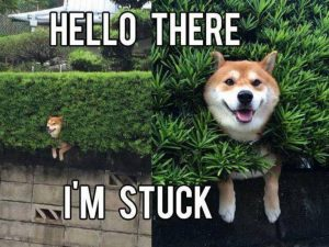 Funny Meme To Cheer Someone Up : Animal memes to cheer you up u the hot feed
